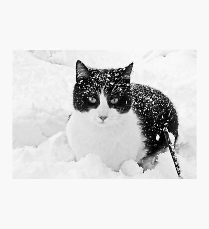 Snow Kitty Black & White Photographic Print