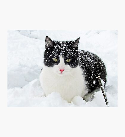 Snow Kitty Photographic Print