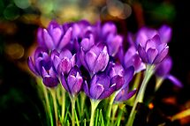 2 winner in 'Spring Flowers Challenge' challenge of group 'Tuesday Afternoon'