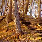 Hidden Stairway by Tim Wright