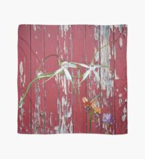Longicordia Orchid with Red Painted Wall, native orchids of Western Australia. Scarf