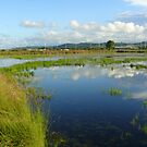 Autumn Wetlands 2 by byronbackyard