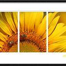 Sunny Sunflower by Kym Howard