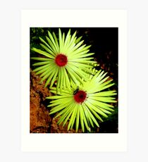 Namaqualand sunshine Art Print