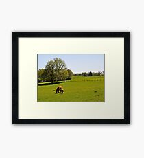 Once upon a cow... Framed Print