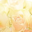 Roses for you by Henrietta Hassinen