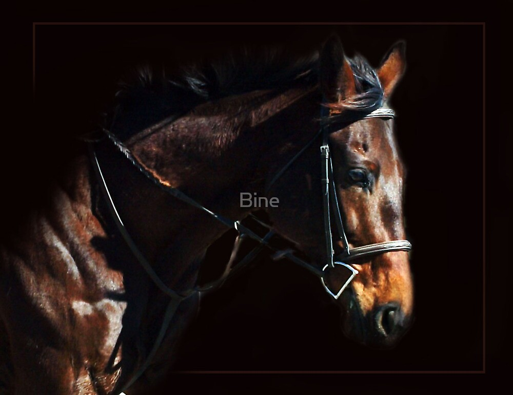 Concentration by Bine