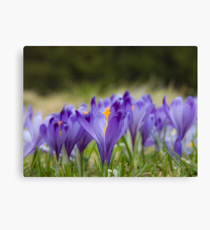 LA POESIA DEI FIORI . by  Doktor Faustus.  Favorites: 4 . Views:354.  Featured in Special Occasions . Canvas Print