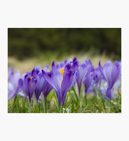 LA POESIA DEI FIORI . by  Doktor Faustus.  Favorites: 4 . Views:354.  Featured in Special Occasions . Photographic Print