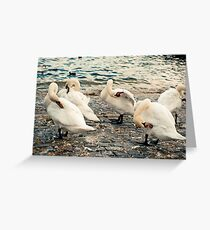 Lake Zurich Swans Greeting Card