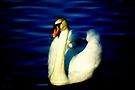 Swan. by Livvy Young
