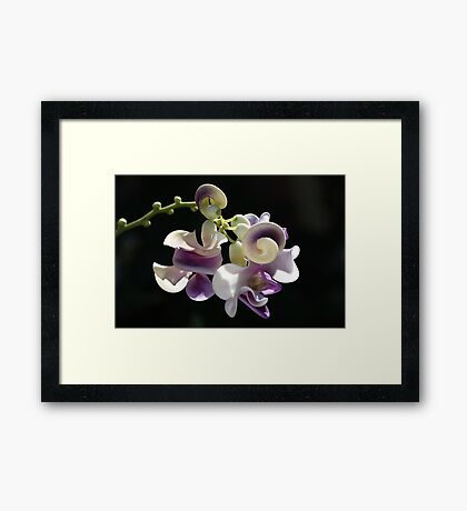 Snail Flower Framed Print