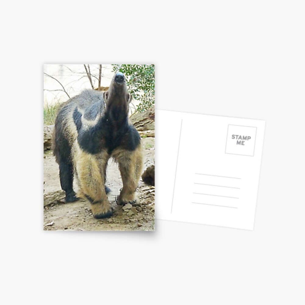Nose of the anteater Postcard