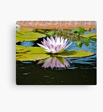 water  lillie. purple Canvas Print