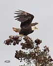 The Wind Beneath My Wings by Todd Weeks