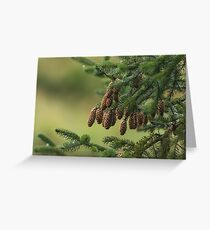Sitka Spruce, Icy Strait Point, Alaska Greeting Card