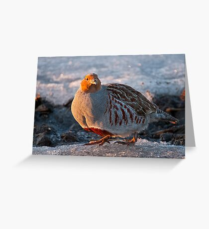Gray Partridge Greeting Card