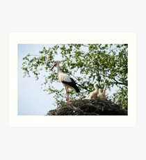 Stork family on the nest  Art Print