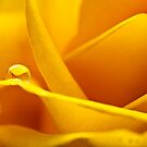 Yellow curves by IvoVuk