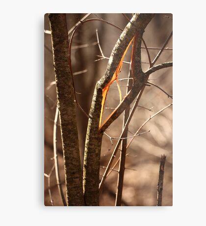 Saw Tree was 'Broke' this way Metal Print