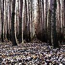 deep woods by malek haneen