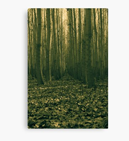 forest trial Canvas Print