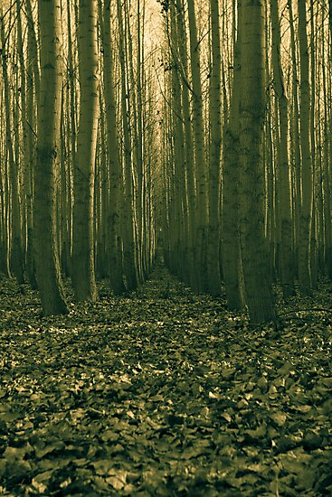 forest trial by malek haneen