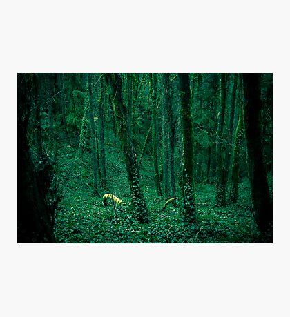 lush Photographic Print