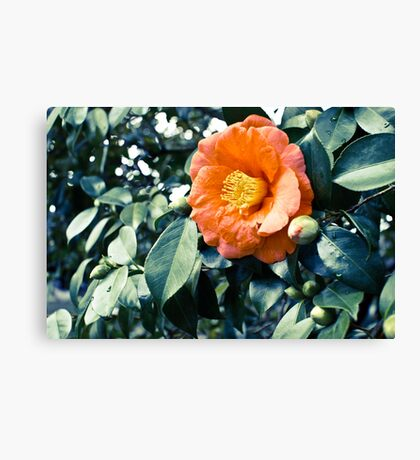 bloomtime Canvas Print