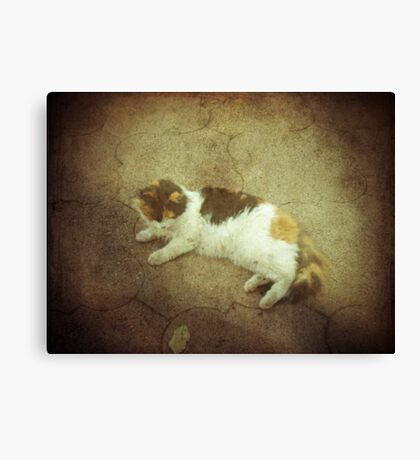 Calico Comfort Canvas Print