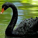 Lonely Black Swan by Joe Jennelle