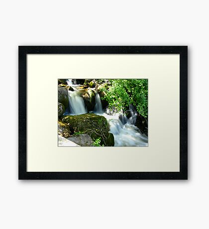 Beauty Behind the Foliage Framed Print
