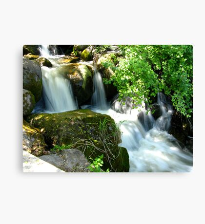 Beauty Behind the Foliage Canvas Print