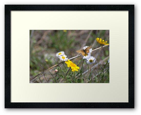 Texas Spring Color by Barbara Shallue