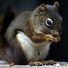 Red Squirrel by Michael Collier