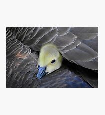 there is no better place than under mom's wing Photographic Print