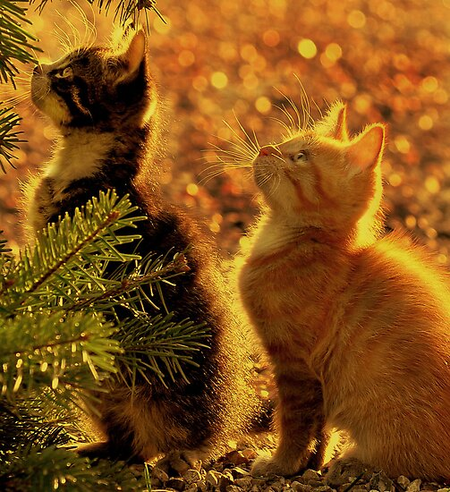 Kittens of gold by Alan Mattison