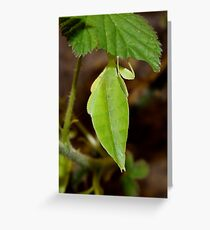 Leaf Lookalike Stick Insect Greeting Card