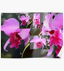 Pink Orchid Collage Poster