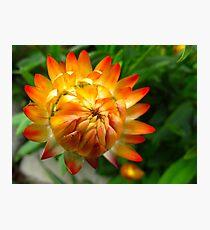 Fireflower Photographic Print