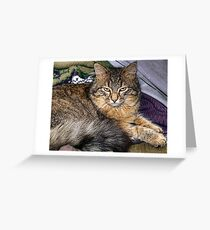 my boy tiny maine coon Greeting Card