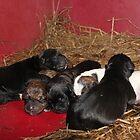 Newborns by DebbieCHayes