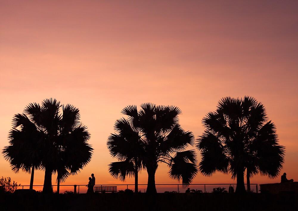 Cullen Bay Ferns by Erik Holt