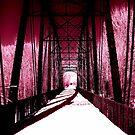 Pink Winter Walk by Brenda Dahl