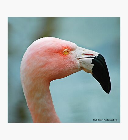 Let's Do The Flamingo Photographic Print