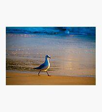 Morning Stroll Photographic Print