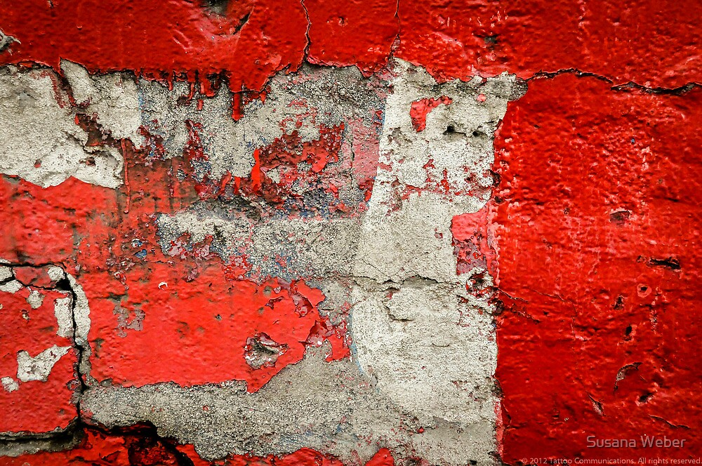 Dog on the red wall by Susana Weber