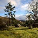 Dromagorteen Stone Circle 2 by CliveOnBeara