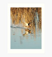 flying over the water Art Print