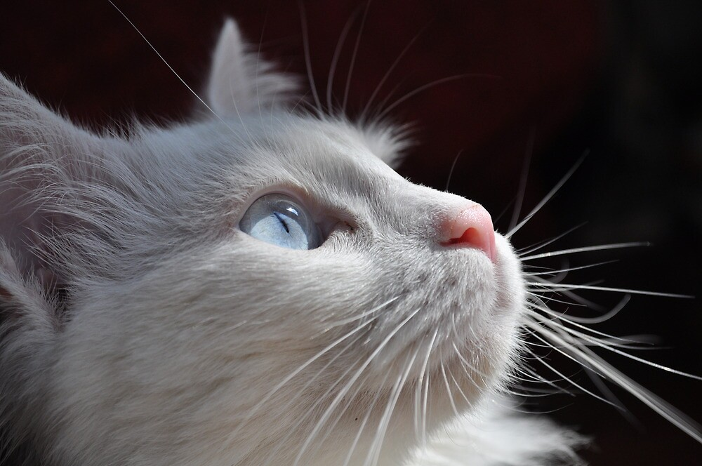 Cat with blue eyes by Katerina Vorvi